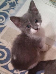 Cute kitten from King Street Cats