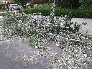 Tree Branches Down in DC