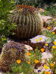 cactus and plants used in traditional xeriscaping